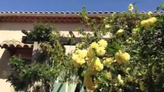 Un dimanche au soleil en Provence