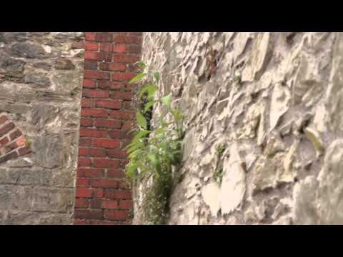 Elizabeth Fort - Urban Interventions Cork