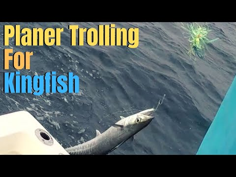 Planer Trolling For KINGFISH