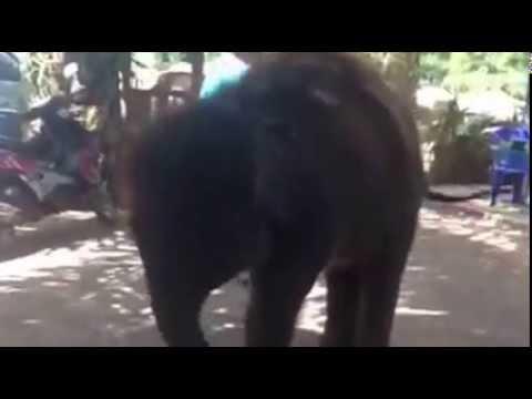 Слон прикольно танцует!!! Подборка приколов из популярной серии \