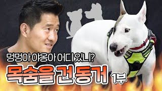 Bull terrier Gurak's aggression that attacks dogs and cat. Part 1 |'Aggression of my dog'