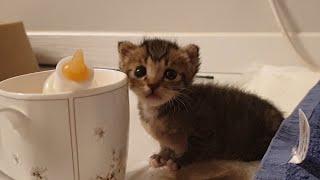 컵보다 작은 새끼 고양이 수유하기 (분유 먹이기) / …
