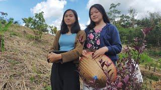Kehidupan Gadis Suku Dayak Di Kalimantan   Petualangan Gadis Dayak Di Alam Bebas