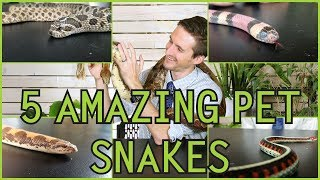 Five of the Best Pet Snakes You Could Possibly Get!
