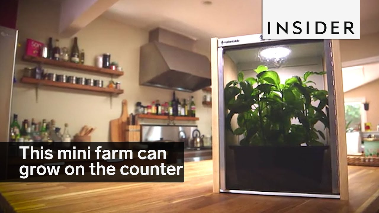 kitchen counter with food. This Miniature Farm Grows Food On Your Kitchen Counter With