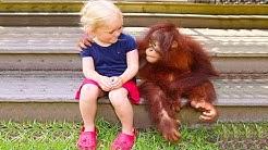 Lustige Haustier-Affen, die mit Kindern und Babys spielen