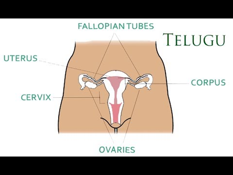 What is the Cervical Cancer Vaccine? - Telugu
