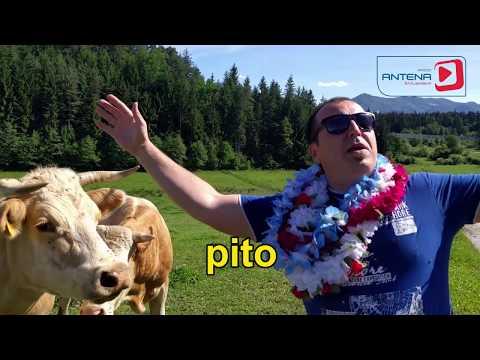 "Mato - Marel'čna pita (""Despacito"" tudi na pašniku)"