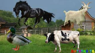 Угадай домашних животных для самых маленьких Домашние животные Развивающие мультики для детей Ферма
