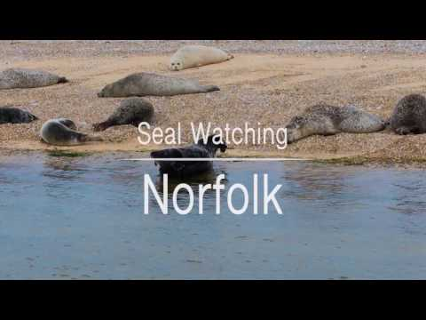 Where to see the seals, Norfolk, UK