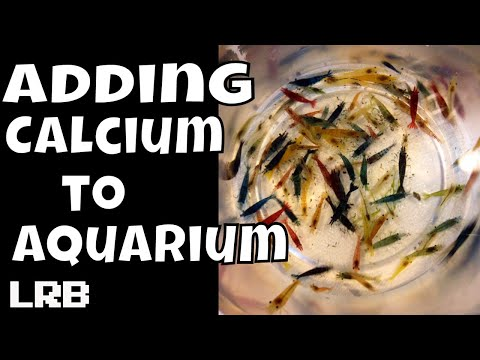 How I Have Been Adding Calcium To My Aquariums