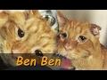 20| Ben Ben el gato más trizte