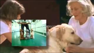 Dog Training For Dummies,best Online Dog Training,dog Training For Dummies