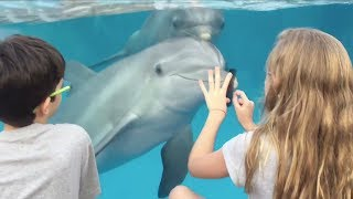 Amazing moment: Girl attracts dolphins with comb