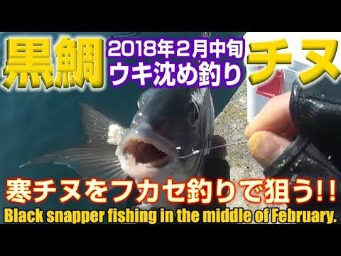フカセ沈め釣りで狙う2月の寒チヌ黒鯛 in 天草 | Black snapper fishing in February