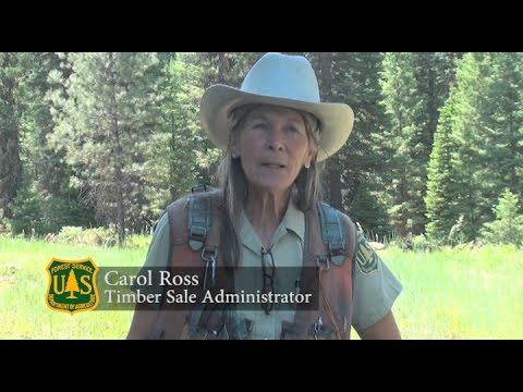 Carol Ross Timber Sale Administrator for the US Forest Service