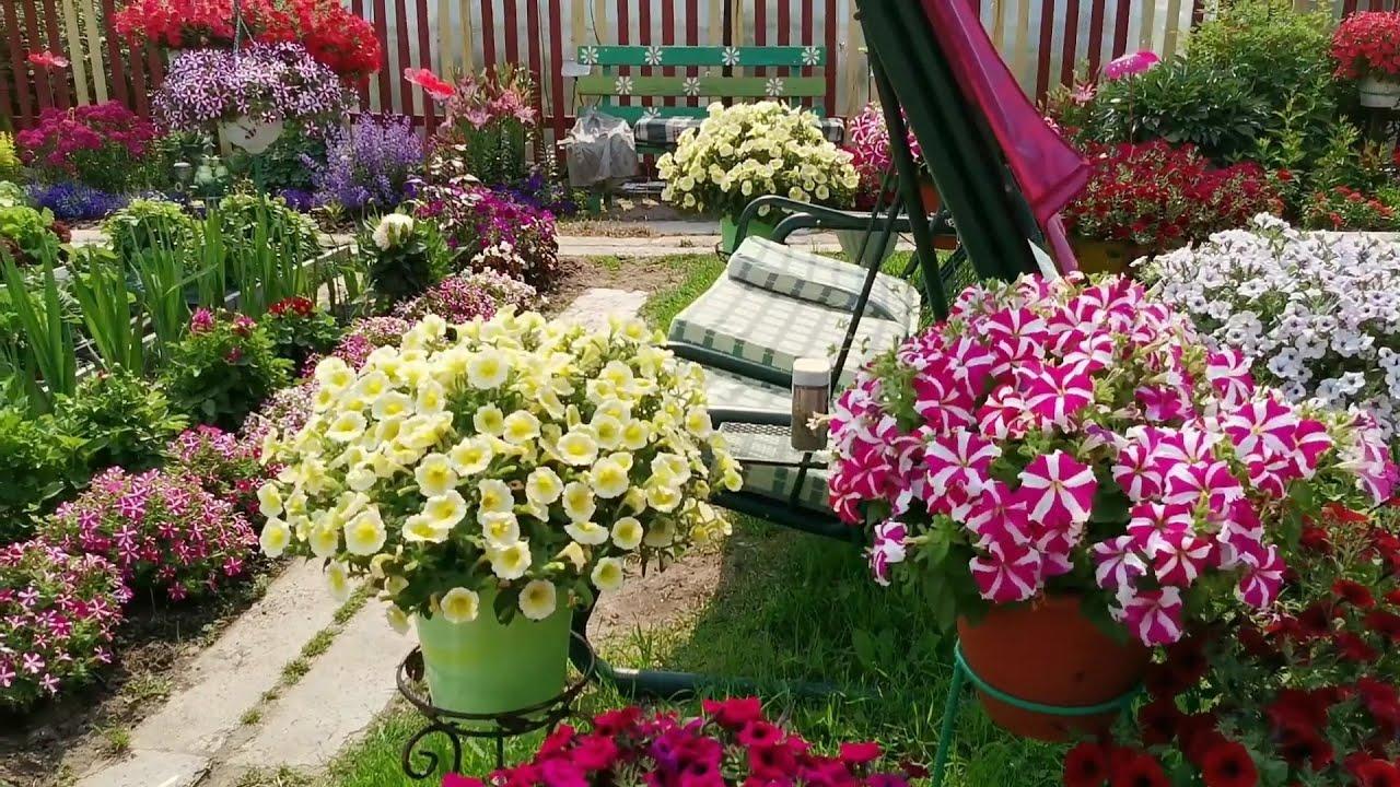 Мой цветочный рай на севере, в Ханты-Мансийском округе.