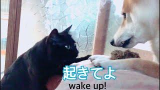 早起きの猫と朝が弱い犬 cat and dog in the early morning thumbnail