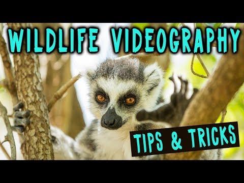 Wildlife Videography Tips & Tricks MADAGASCAR