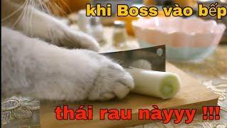Khi Boss nhà bạn là đầu bếp đại tài 🥰