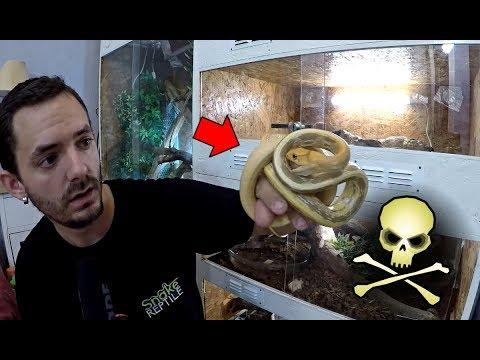 Je Me Fait MORDRE Par Plein De Serpents !