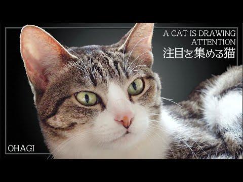 注目を集める猫
