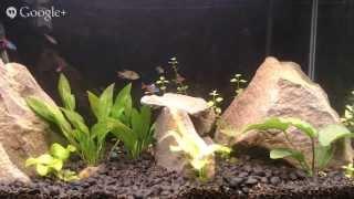 Dat fish tank