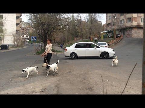 Yerevan, 21.04.17, Fr, Video-1, Lvovyan Poghots