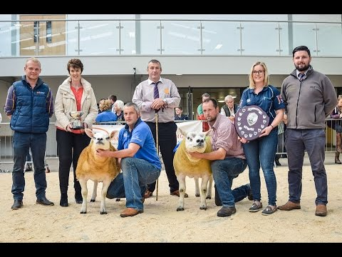 Solway and Tyne Texel Breeders Club Show and Sale - September 1st & 2nd 2016