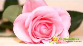 Доставка цветов На радость ру(, 2013-01-02T08:53:02.000Z)