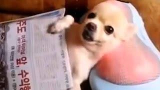 videos de risa de animales divertidos...