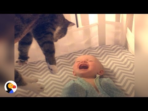 Baby Gets SO EXCITED To See Cat | The Dodo