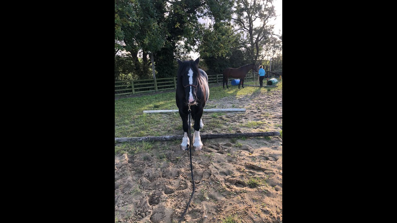 30 Day Horse Vlog Day 22 - Poultry / Gorgeous Ride / Groundwork with Dylan
