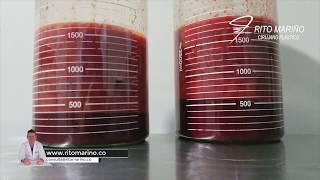 Extraccion de Biopolimeros | Alivie los Síntomas
