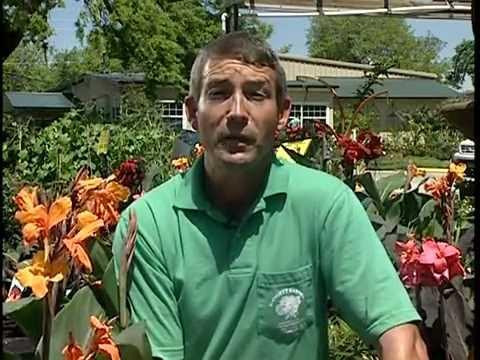 Blodgett Gardens - Orlando Garden Center & Landscaping Company (407) 295-2363