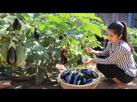 Yummy Eggplants Cooking / Eggplant Recipe / Prepare By Countryside Life TV