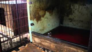 Another Dog Meat Farm Shutdown