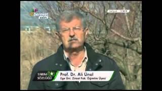 Şeftali Yetiştiriciliği Şeftali Ağacının Budanması 7. Bölüm