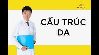 Dr Ngọc - Cấu trúc da trong lĩnh vực thẩm mỹ thumbnail
