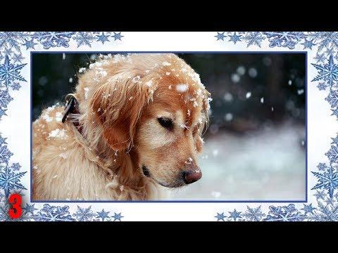 Day 3 | Christmas/Winter Backgrounds | #ADVENTCALENDAR2017