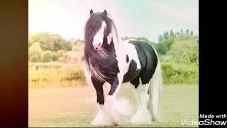 اجمل صور خيول مع اجمل اغنية انا لما بحب بجن ❤️❤️❤️❤️❤️