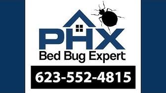 Surprise AZ Bed Bug Exterminator - 623-552-4815 | Bed Bug Treatment