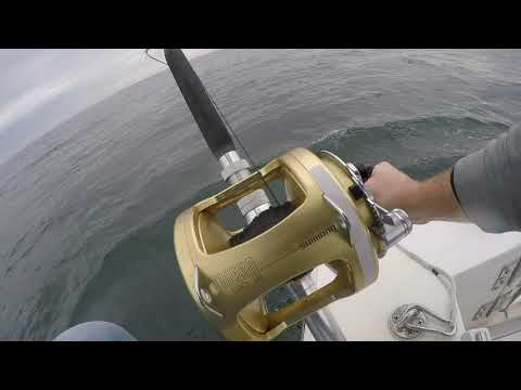 GIANT Bluefin Tuna Fishing - Gloucester, MA