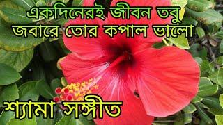 একদিনেরই জীবন তবু জবা রে তোর কপাল ভালো/Akdiner e jibon tobu joba ra tor kopal valo