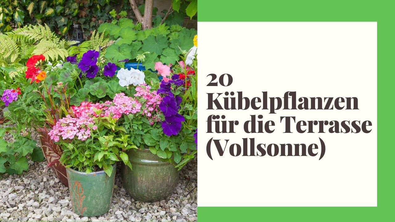 20 Kübelpflanzen für die Terrasse Vollsonne und Sonnige Standorte