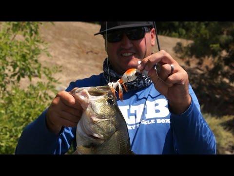 Summertime Bass Fishing Tips!
