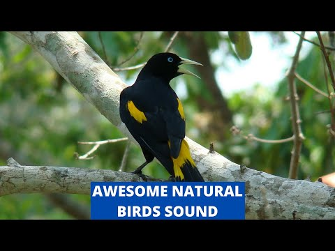 Birds Sounds for Relaxing 5 Minutes