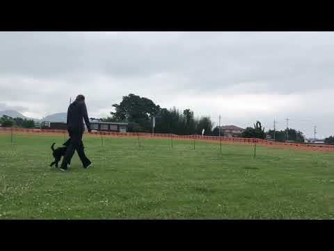 Phoenix DogDancing almost 4 months