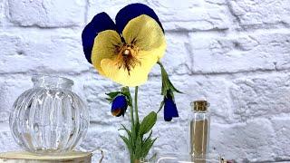 аНЮТИНЫ ГЛАЗКИ  Цветы из бумаги
