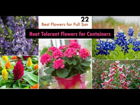 22 Best Heat Tolerant Flowers for Full Sun
